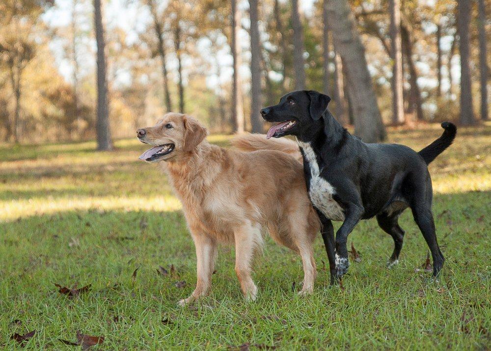 Izzie & Tilly Mullen